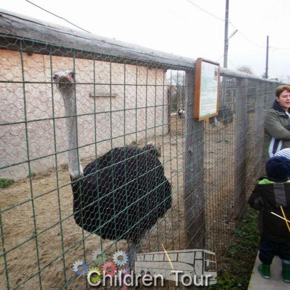 Vizita la Ferma Animalelor
